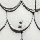 Old roof tile structure  with spider and shadow. In grey colors Stock Photo