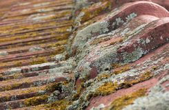 Moss covered terracotta roof tiles close up Stock Images