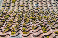 Old roof tiles, green education, roofs Royalty Free Stock Photo