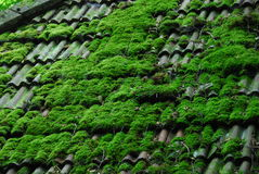 Old Roof Tiles with Moss Royalty Free Stock Photos
