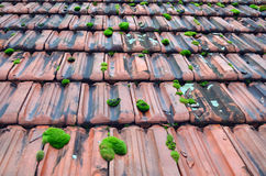 Old roof tiles. Old red roof tiles covered with green moss Royalty Free Stock Photos
