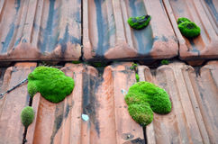 Old roof tiles. Old red roof tiles covered with green moss Royalty Free Stock Images