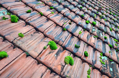 Old roof tiles. Old red roof tiles covered with green moss Stock Photo