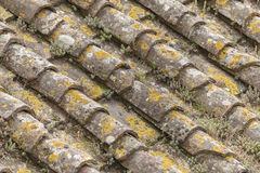 Old roofs Stock Images