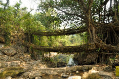 Old root bridge in India. Old root bridges near Cherapunjee, Meghalaya, India Stock Photo