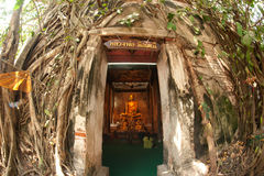 Old root tree around ancient Thai church. Royalty Free Stock Images