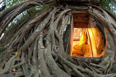 Old root tree around ancient Thai church. Royalty Free Stock Photography
