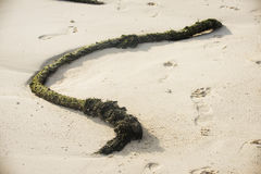Old rope on the beach. Old rope on the beach Royalty Free Stock Images