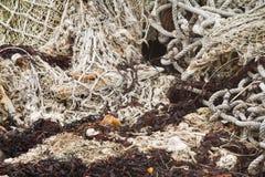 Old rope fishing net trawl Stock Photo