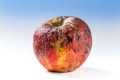 Old rotten apple. Covered with mold, bad storage Royalty Free Stock Photo
