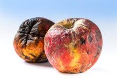 Old rotten apple Stock Photo