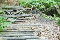 Old rotten bridge in the forest Royalty Free Stock Images