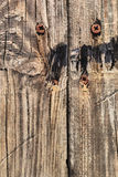 Old Rotten Cracked Planks With Rusty Phillips Screws Embedded - Detail Stock Images