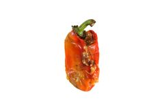 Old rotten pepper Stock Photography