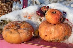 Old rotten pumpkin partially covered with snow royalty free stock photography