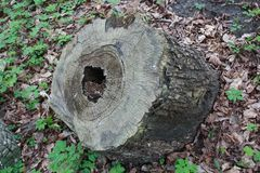 rotten stump in the woods stock photos