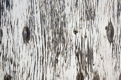 Old Rotten Wood Abstract. An abstract image of old rotten wood with white peeling paint Stock Image
