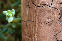 Old, Rotten Wood And Branch Plants Royalty Free Stock Photo