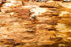 Old rotten wood Royalty Free Stock Photos