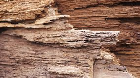 Old rotten wood stock footage