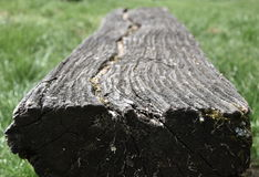 Old rotten wooden bench in a meadow Royalty Free Stock Photography