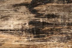 Burned wooden surface, textured and detailed. Old rough and burned wooden surface close up, dirty, textured and detailed Royalty Free Stock Photo
