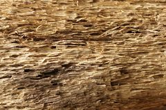 Old dry drift wood weathered and grunge. Old rough and weathered wooden surface close up, dirty, textured and detailed stock images