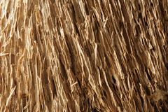 Old dry drift wood weathered and grunge. Old rough and weathered wooden surface close up, dirty, textured and detailed Stock Image