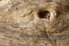 Old dry drift wood weathered and grunge. Old rough and weathered wooden surface close up, textured and detailed royalty free stock images