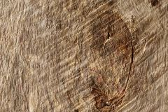 Old dry wood weathered and grunge. Old rough and weathered wooden surface close up, textured and detailed Royalty Free Stock Image