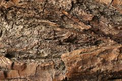 Old weathered wooden surface, textured and detailed. Old rough wooden surface close up, textured and detailed, background Royalty Free Stock Photos