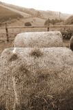 Old round bales in irish countryside Stock Image