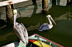 Old row boat and pelicans on a wharf Royalty Free Stock Photos