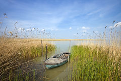 Old rowing boat among the reeds Royalty Free Stock Photo
