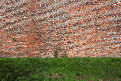 Old rugged brick wall with green grass. Abstract background texture with old rugged brick wall and green grass Royalty Free Stock Images