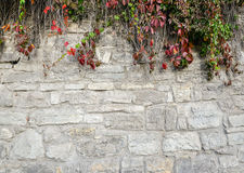 Old, rugged brick wall texture with bright fall greenery perfect for background Stock Image