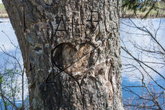 The old rugged tree trunk with a knife. Royalty Free Stock Images