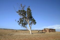 Old ruin farm house. Azure clear sky over the old ruin farm house with bare tree and drought land. Western Australia Royalty Free Stock Photos
