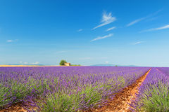 Old ruin in Lavender fields Royalty Free Stock Photos