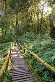 Old and Ruin wood walk path covered with moss and fern in green tropical forest Stock Images