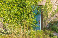 Old ruin with wooden door and ivy Royalty Free Stock Photography