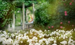Free Old Ruined Gazebo In The Thickets Of Blooming Jasmine And Fluffy Bloom Of White Roses. Silhouette Of A Girl With A Book In The Royalty Free Stock Images - 150218489
