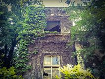 Old ruined ghost house. With ivy plants and trees Stock Images