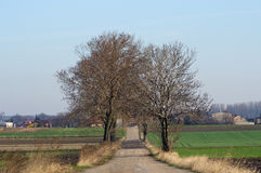 Old ruined road in Poland Royalty Free Stock Images