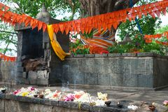 Old ruined shrine and fresh offerings near sacred holy tree. With flags on branches in the Dambulla Golden cave buddhist temple Royalty Free Stock Images