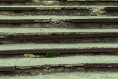 Old and ruined steps. On the old destroyed steps the grass grows Royalty Free Stock Photos