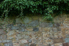 The old ruined stone wall and green ivy Stock Photo