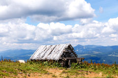 Old ruined wooden barn in  mountains and cow Stock Photos