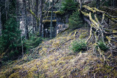 Old ruins in forest Stock Photo