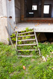 Old ruins stairs. Old ruins wooden stairs in abandoned building royalty free stock image